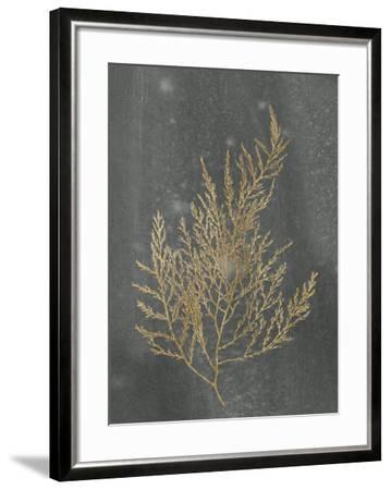 Gold Foil Algae II on Black-Jennifer Goldberger-Framed Art Print