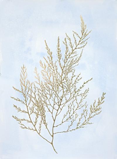 Gold Foil Algae II on Blue-Jennifer Goldberger-Art Print