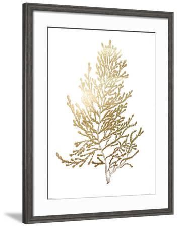 Gold Foil Algae IV-Jennifer Goldberger-Framed Art Print