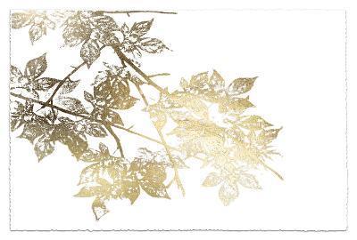 Gold Foil Maple I Deckled-Jennifer Goldberger-Art Print