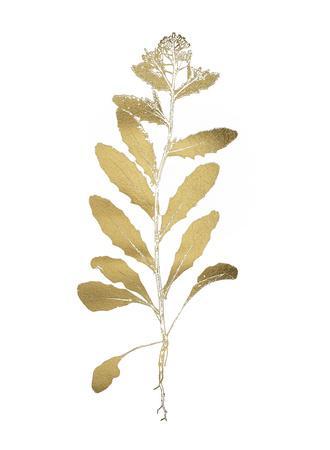 https://imgc.artprintimages.com/img/print/gold-foil-nature-study-iv_u-l-f9fz5h0.jpg?p=0