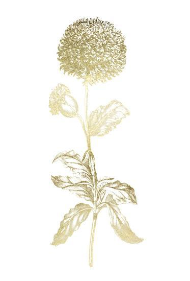 Gold Foil Singular Beauty II-Vision Studio-Art Print