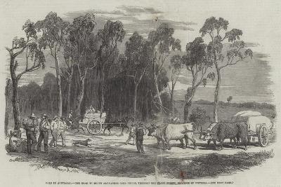 Gold in Australia--Giclee Print