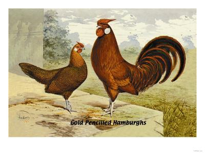 Gold Pencilled Hamburghs--Art Print