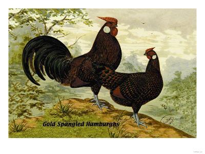 Gold Spangled Hamburghs--Art Print