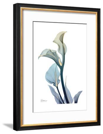 Gold Splash Calla Lily-Albert Koetsier-Framed Art Print