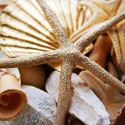 Gold Starfish II-Susan Bryant-Photographic Print