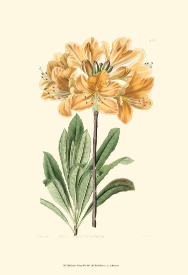 Golden Beauty II-Sydenham Teast Edwards-Art Print