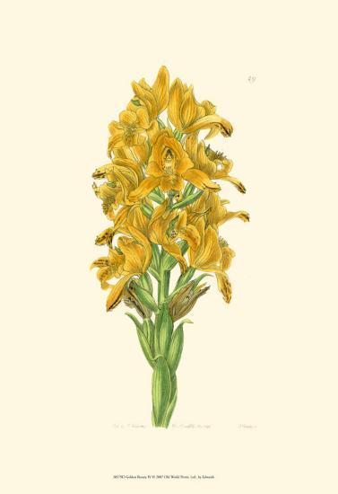 Golden Beauty IV-Sydenham Teast Edwards-Art Print