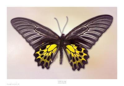 Golden Birdwing-Richard Reynolds-Art Print
