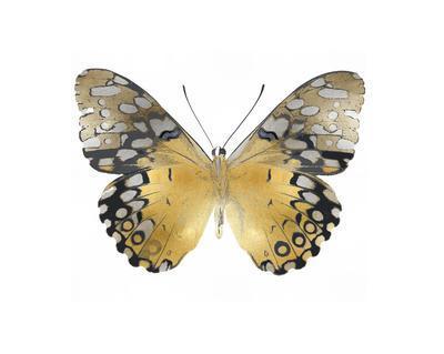 https://imgc.artprintimages.com/img/print/golden-butterfly-i_u-l-f8nv4z0.jpg?p=0