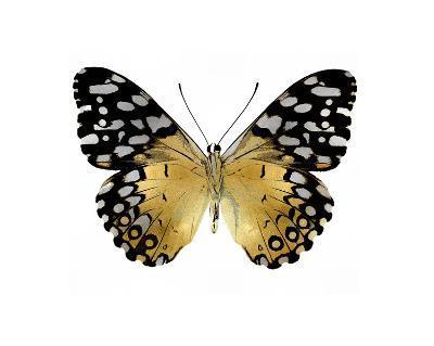 Golden Butterfly IV-Julia Bosco-Giclee Print
