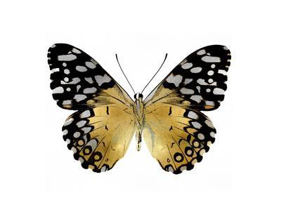 https://imgc.artprintimages.com/img/print/golden-butterfly-iv_u-l-f8nva10.jpg?p=0