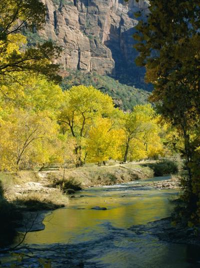 Golden Cottonwood Trees on Banks of the Virgin River, Zion National Park, Utah, USA-Ruth Tomlinson-Photographic Print
