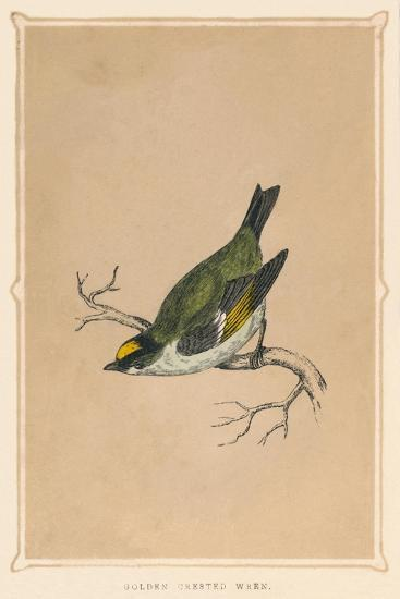 'Golden Crested Wren', (Regulus regulus), c1850, (1856)-Unknown-Giclee Print