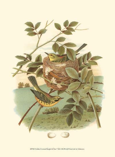 Golden Crowned Kinglet & Nest--Art Print