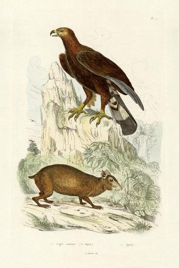 Golden Eagle, 1833-39--Giclee Print