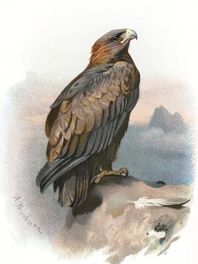 Golden Eagle, Historical Artwork-Sheila Terry-Photographic Print