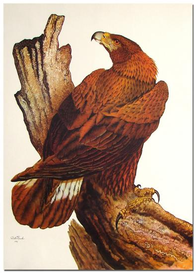 Golden Eagle-Dale Hauck-Limited Edition
