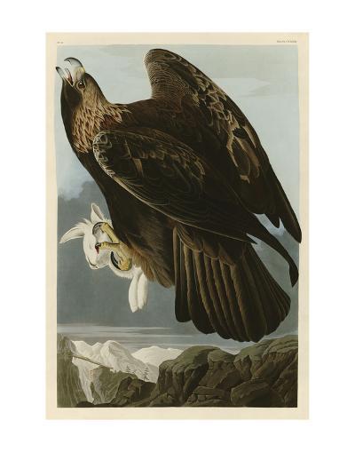 Golden Eagle-John James Audubon-Art Print