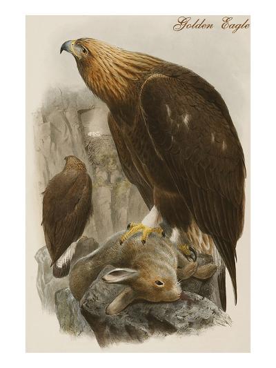 Golden Eagle-John Gould-Art Print