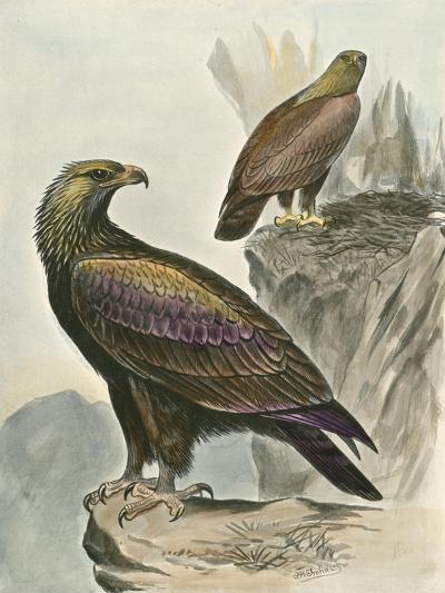 Golden Eagle-F^w^ Frohawk-Art Print