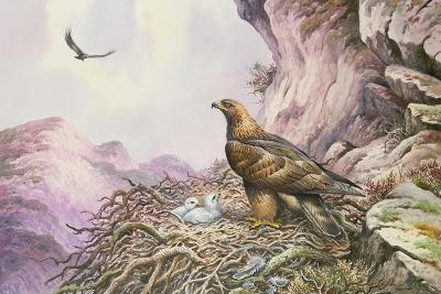 Golden Eagles at their Eyrie-Carl Donner-Giclee Print