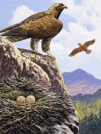 Golden Eagles Nest--Giclee Print