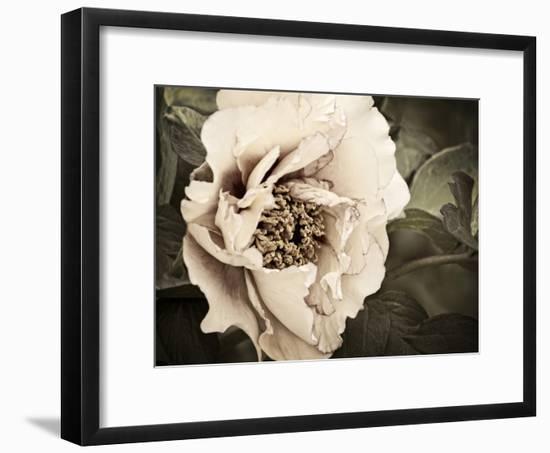 Golden Era Peony I-Rachel Perry-Framed Art Print