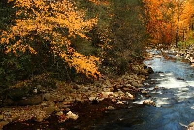 Golden foliage reflected in mountain creek, Smoky Mountain National Park, Tennessee, USA-Anna Miller-Photographic Print