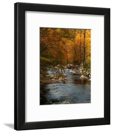 Golden foliage reflected in mountain creek, Smoky Mountain National Park, Tennessee, USA-Anna Miller-Framed Photographic Print