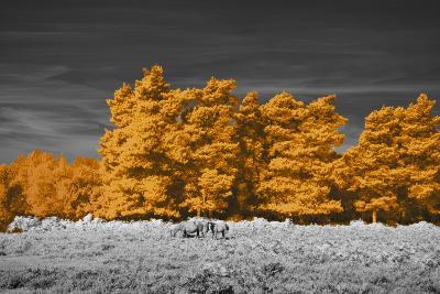 Golden Forest-Linda Wood-Giclee Print