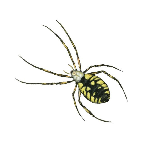 Golden Garden Spider (Argiope Aurantia), Arachnids-Encyclopaedia Britannica-Art Print