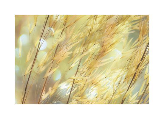 Golden Grasses-Don Paulson-Giclee Print