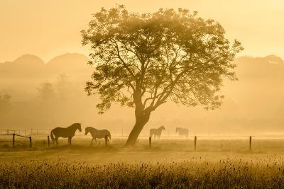 Golden Horses-Richard Guijt-Photographic Print