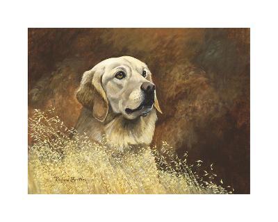 Golden Labrador-Richard Britton-Premium Giclee Print
