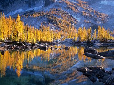 Golden Larch Trees Reflected in Leprechaun Lake, Enchantment Lakes, Alpine Lakes Wilderness-Jamie & Judy Wild-Photographic Print