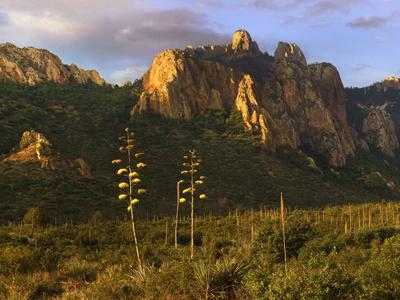 https://imgc.artprintimages.com/img/print/golden-light-covers-century-plants-and-the-chisos-mountains-big-bend-national-park-texas_u-l-q1d2qjv0.jpg?p=0