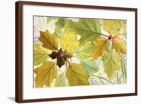 Golden Oak-Judy Stalus-Framed Photographic Print
