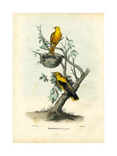 Golden Oriole, 1863-79-Raimundo Petraroja-Giclee Print