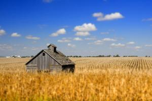 Barn in Iowa Cornfield by Golden Photo Video