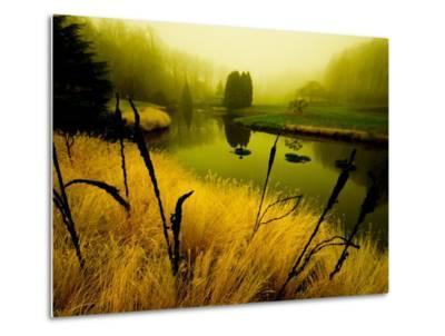 Golden Plant Growth along Peaceful River-Jan Lakey-Metal Print