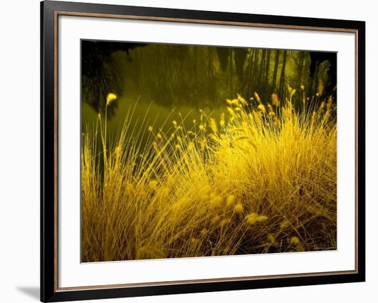 Golden Plants along River with Reflections of Trees-Jan Lakey-Framed Photographic Print