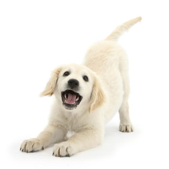 Image result for dog playing white background