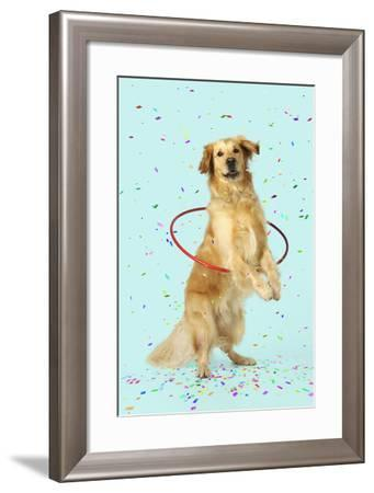 Golden Retriever Doing Hoola Hoop with Falling Confetti--Framed Photographic Print