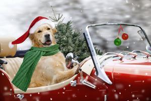 Golden Retriever Driving Car Collecting Christmas Tree