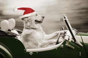 Golden Retriever in Car Wearing Christmas Hat