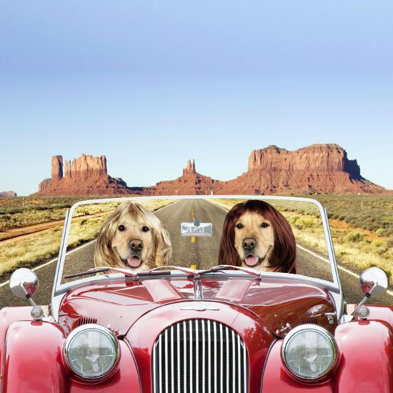 Golden Retrievers Driving Car Through Desert Scene--Photographic Print