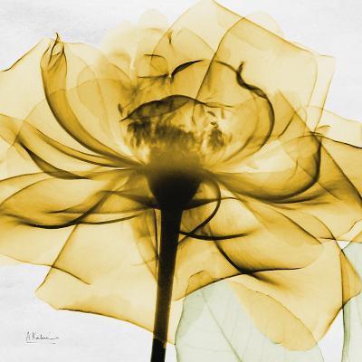 Golden Rose Close-Up-Albert Koetsier-Art Print