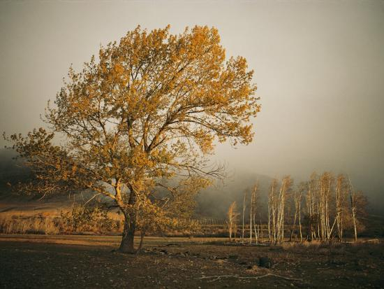 Golden Sunlit Tree in the Mist-Sisse Brimberg-Photographic Print